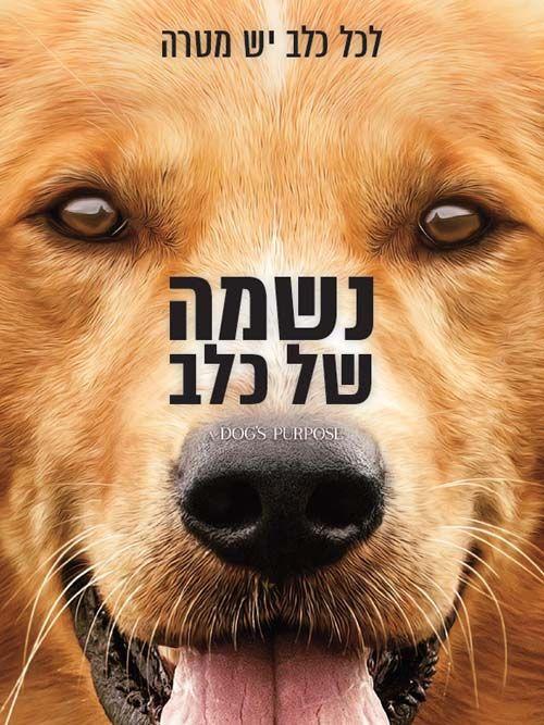 נשמה של כלב (DVD)